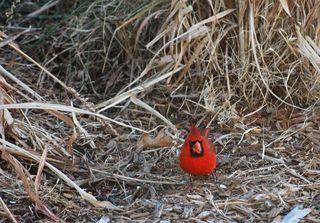 RedbirdJan1b