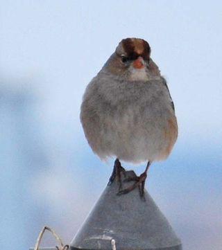 SparrowfaceJan10