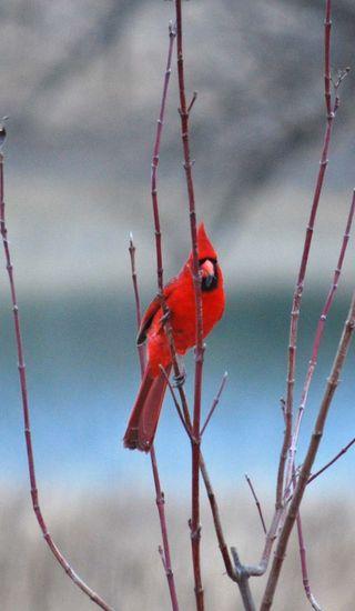 CardinalJan16a
