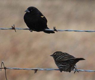 BirdswireJan20
