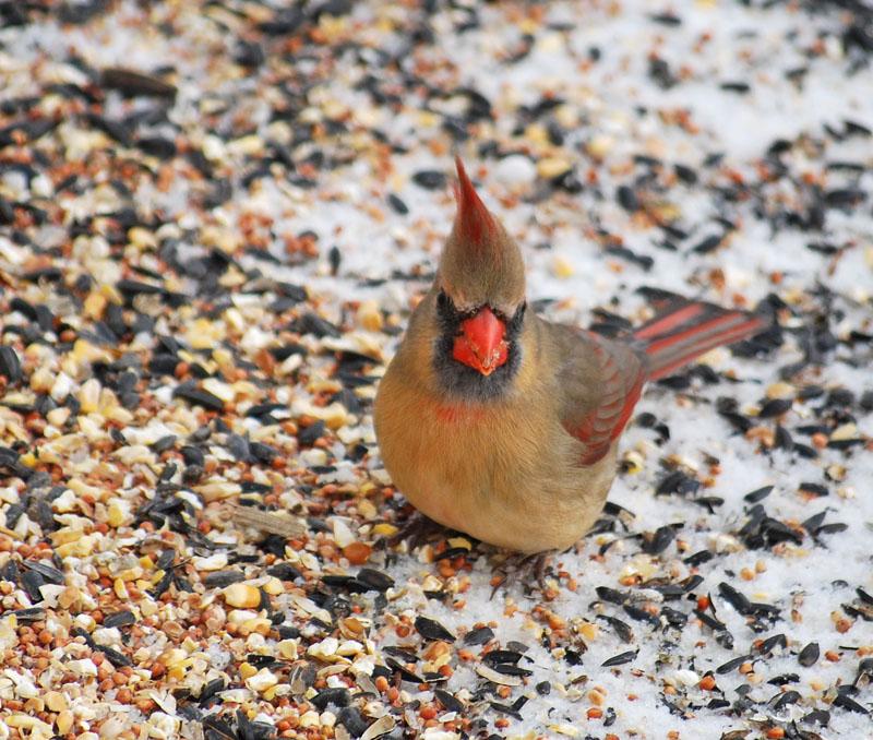 CardinalFeb1
