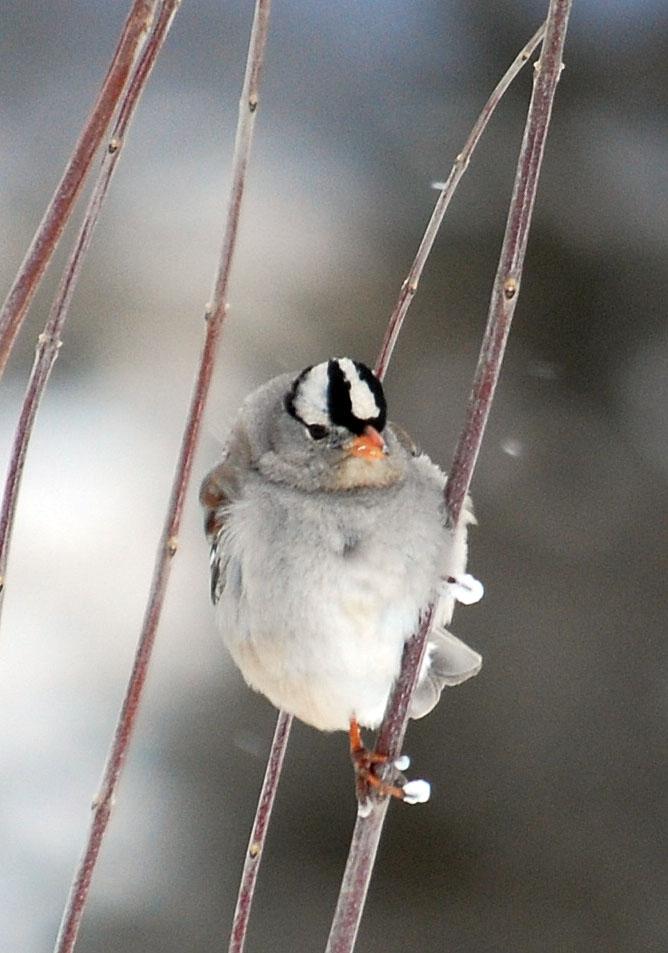 SparrowtreeFeb4