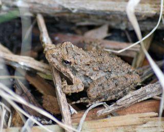 FrogFeb27a