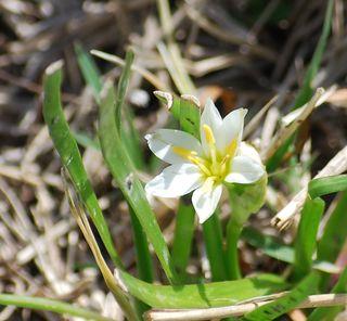 WildflowerMar12