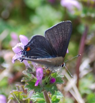 ButterflyMar15