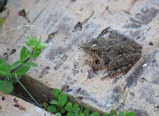 FrogMar25