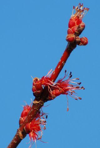 BlossomMar2