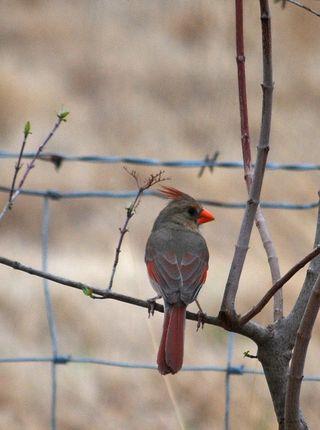 CardinalMar13