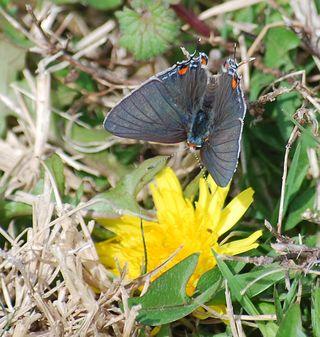ButterflyMar15a