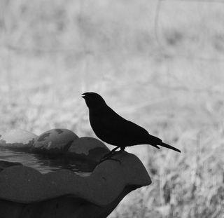 BirdBWmar23