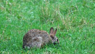 RabbitAp23a