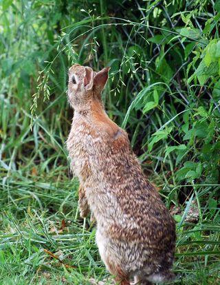 RabbitAp25a