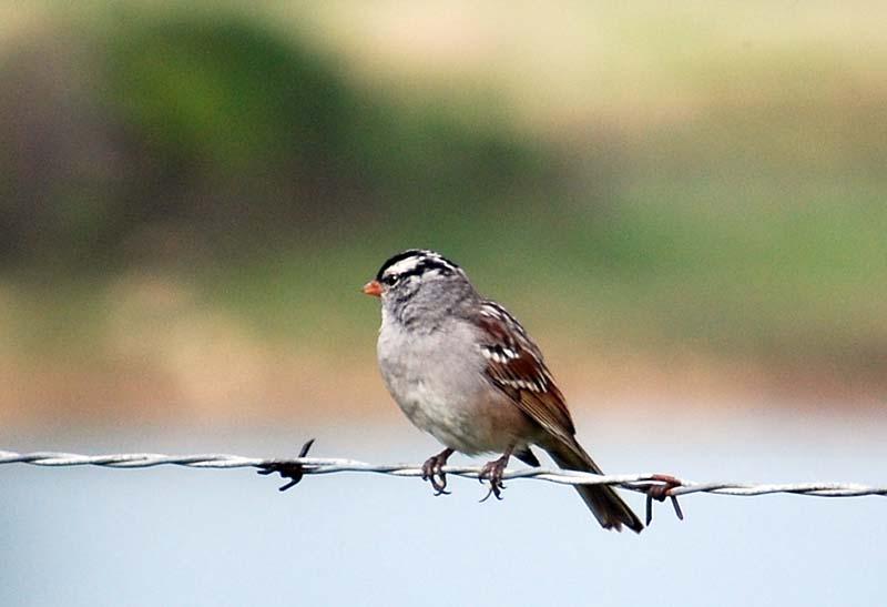 SparrowcloseAp25