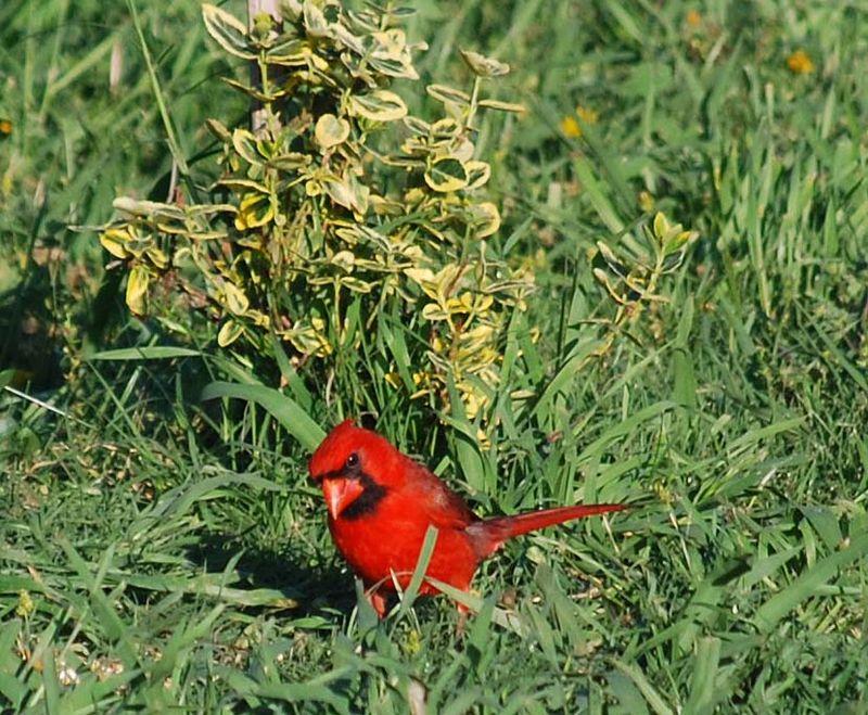 CardinalMay3