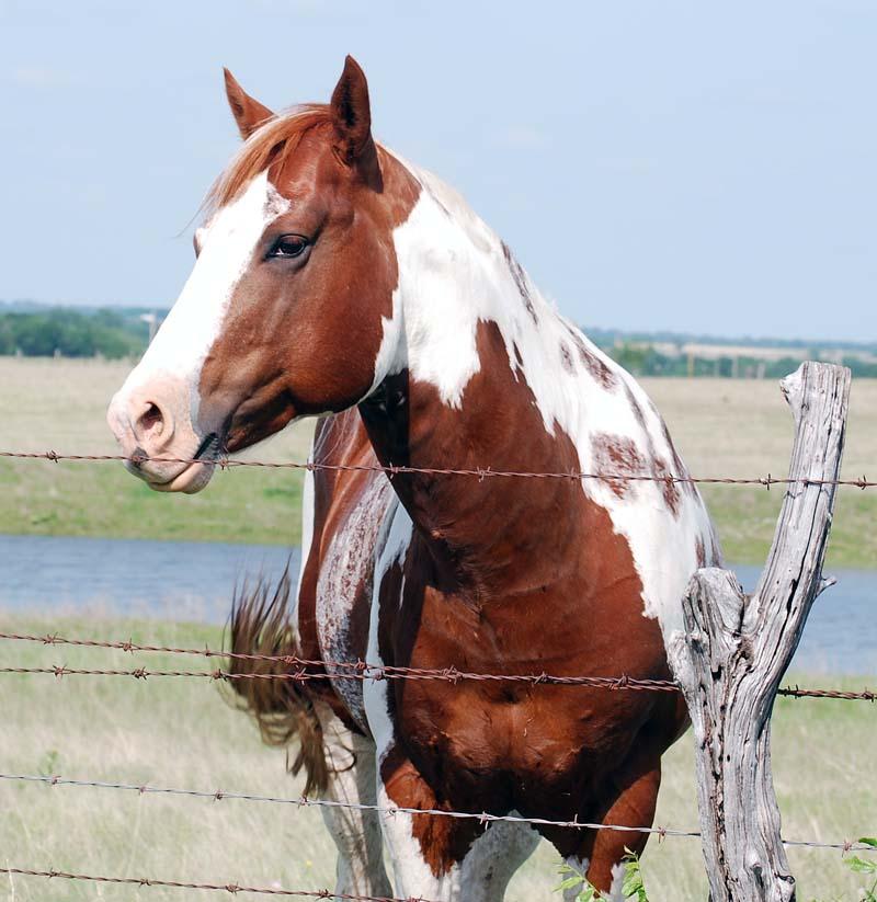 HorseMay7b