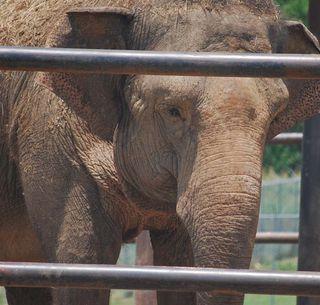 ElephantJune2