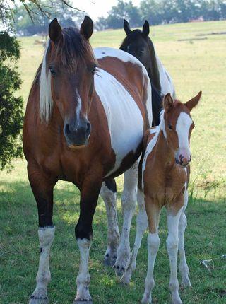 HorsesJul2