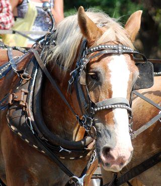 HorseJul30a