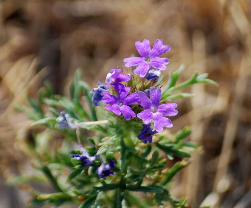 WildflowersAug2