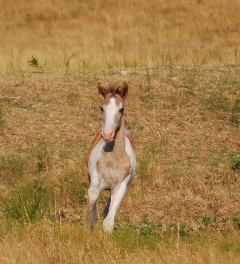FoalAug27a