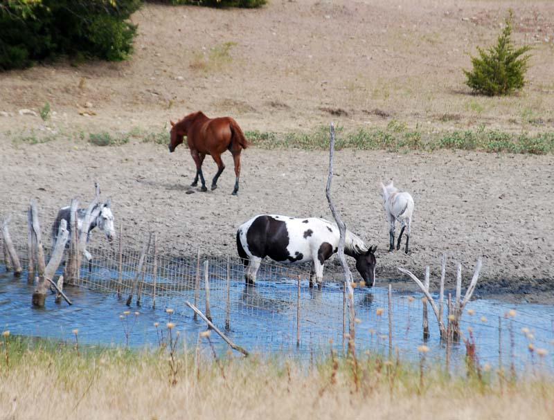 HorsesSep7b