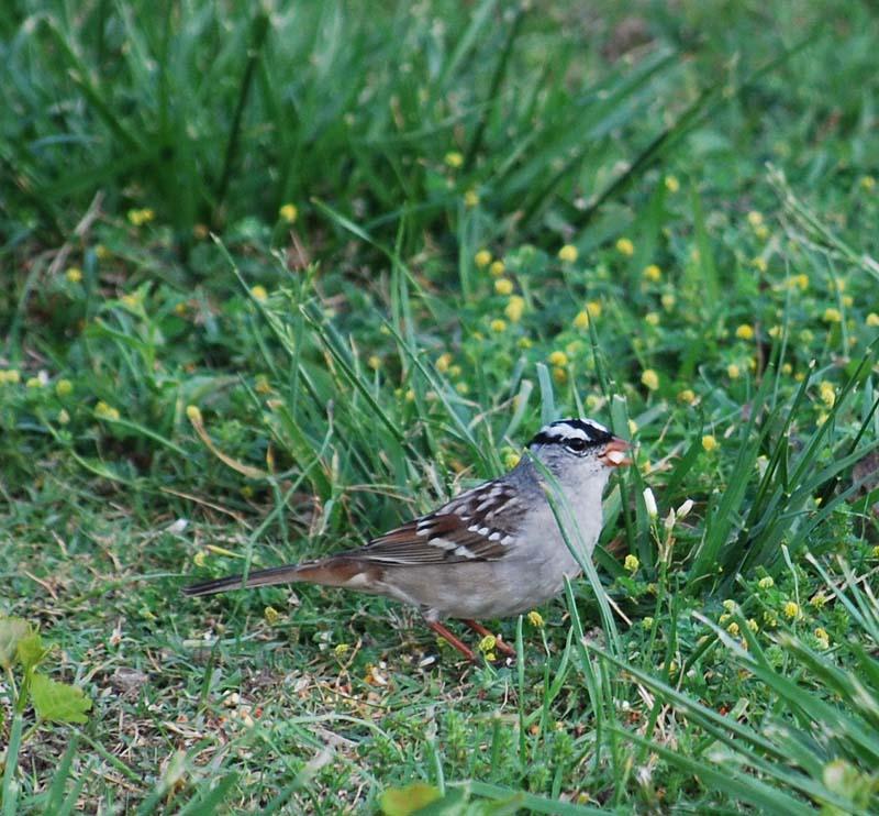 SparrowAp23