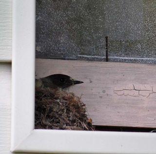 NestingbirdAp24