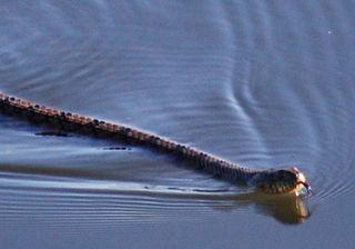 SnakeMay26a