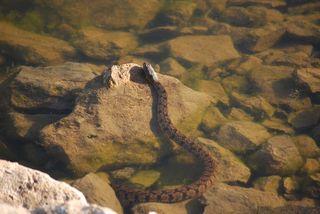 SnakeMay26d
