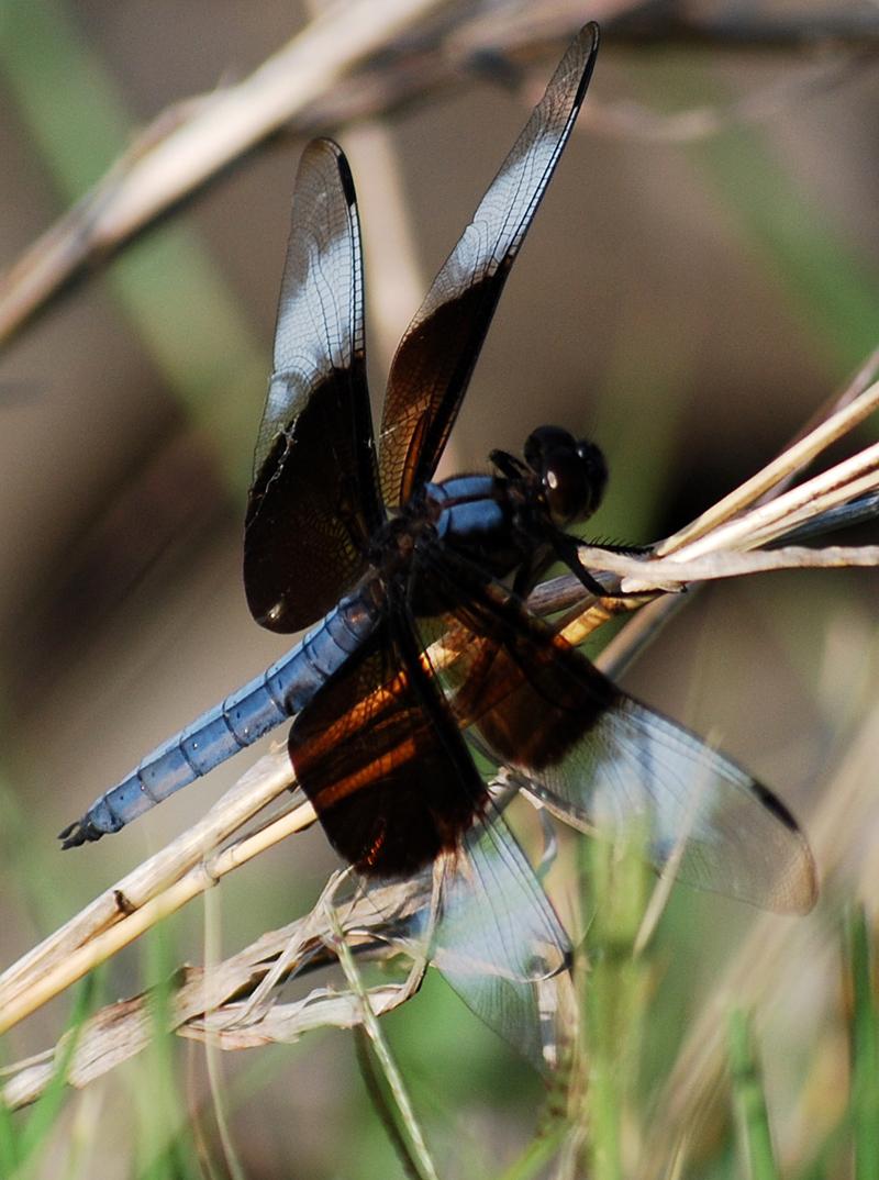 DragonflyJun12