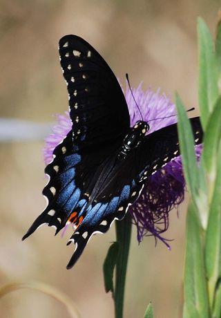 ButterflyJun23
