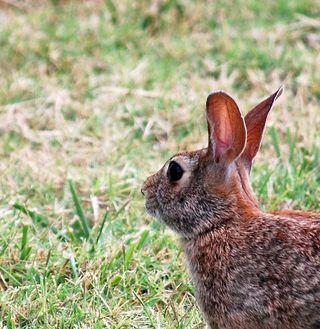 RabbitJun28