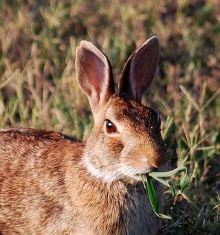 RabbitfaceJul12