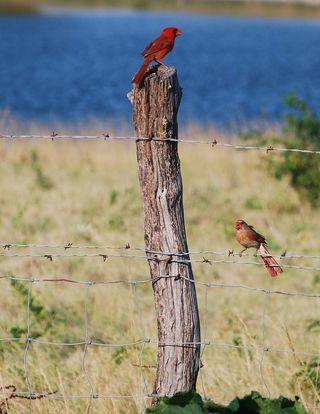 RedbirdsJul16