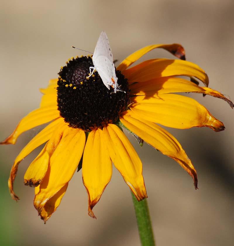 ButterflyJul19