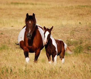 HorsesAug27