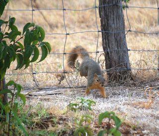 SquirrelAug28
