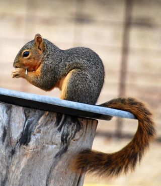 SquirrelAug28c