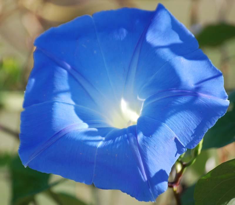 BluemornOct16