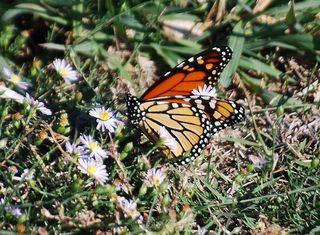 ButterflyNov1