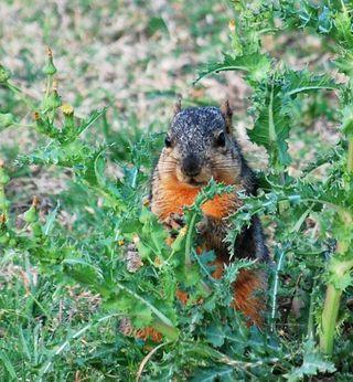 SquirrelAp23e