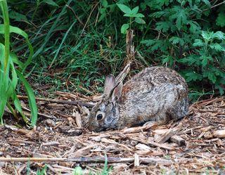 RabbitAp23