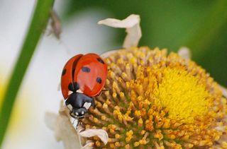 LadybugAp24a_edited-1