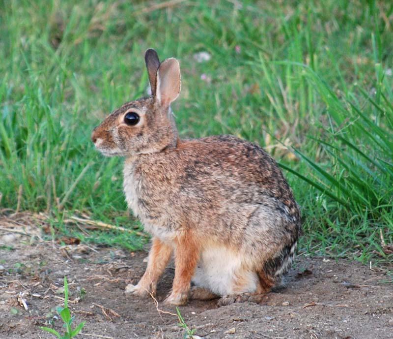 RabbitMay26