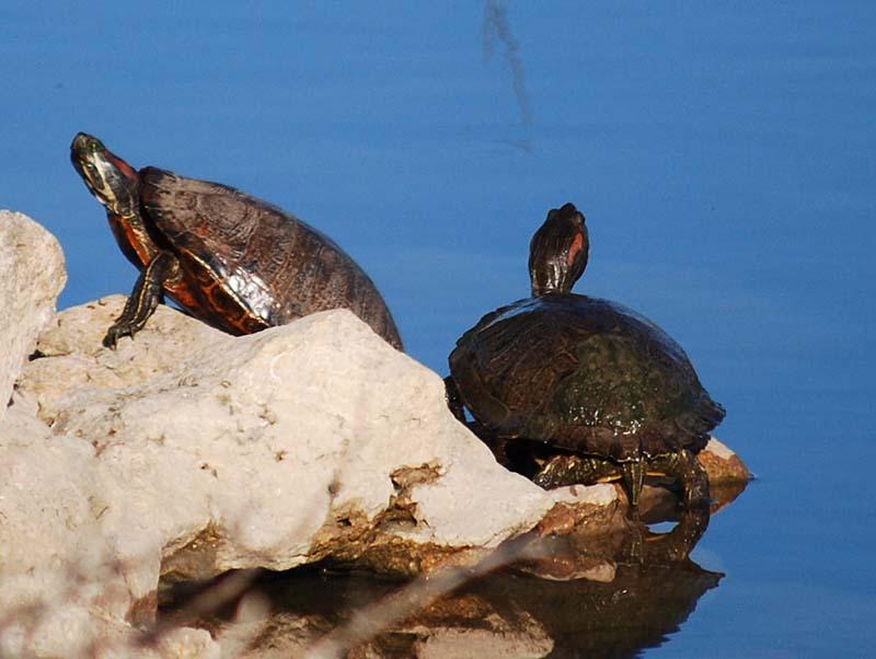 TurtlesMay26