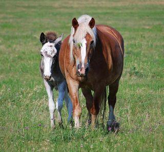 HorsesJun23