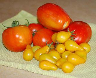 HarvestJun25