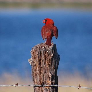 RedbirdJul16