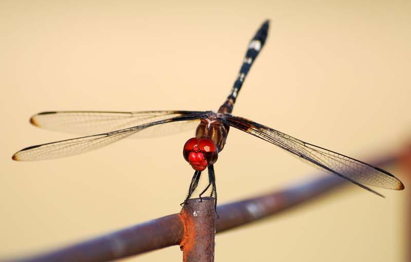 DragonflyJul19