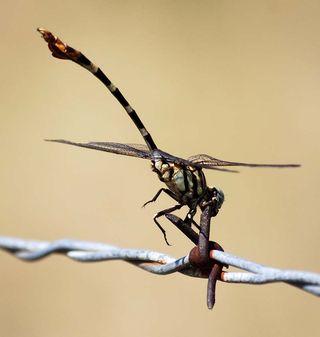 DragonflyJul19e